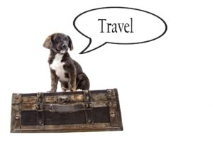 travel with pet ipswich